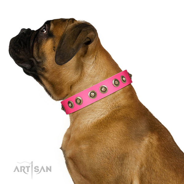 Full grain leather collar with decorations for your attractive dog