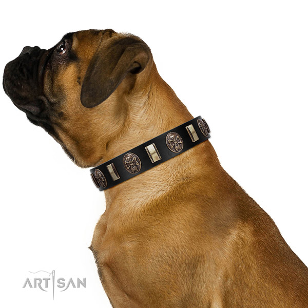 Genuine leather collar with adornments for your attractive four-legged friend