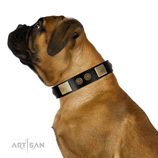 Everyday walking dog collar of leather with exquisite embellishments