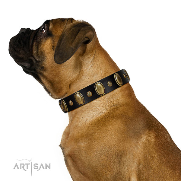 Full grain natural leather dog collar of soft to touch material with designer decorations