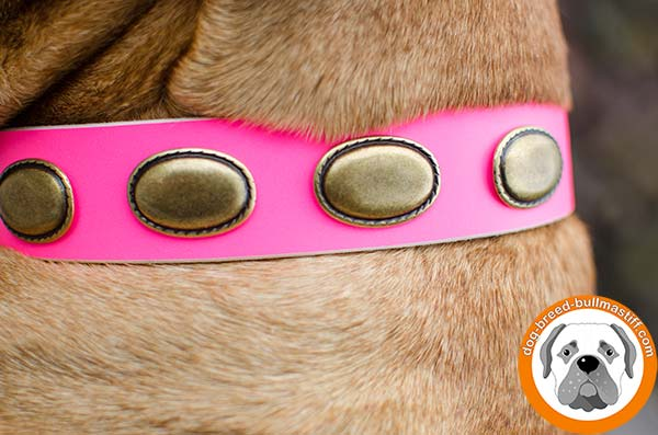 Colorful Leather Bullmastiff Collar with Brass Ovals