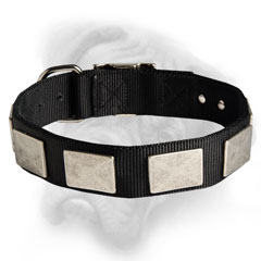 Great Nylon Bullmastff dog collar equipped with buckle and D-ring
