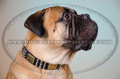 Great Dog Collar made of leather