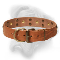 Genuine leather collar with brass fittings for  Bullmastiff