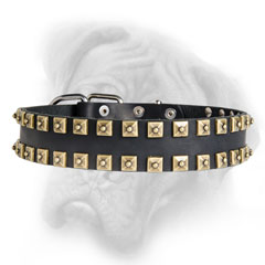 Adjustable Bullmastiff collar with square studs