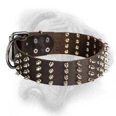 Trendy Bullmastiff collar with 4 rows of spikes