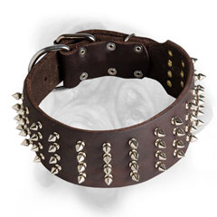 Leather Bullmastiff collar with nickel spikes