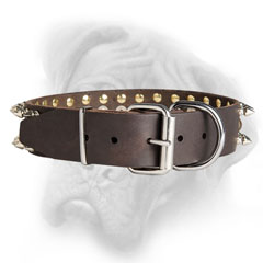 Quality Bullmastiff collar with reliable fittings
