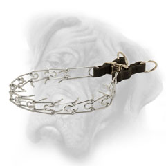 Chrome plated prong collar with leather part for  Bullmastiff