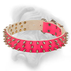 Splendid pink Bullmastiff collar easy in handling