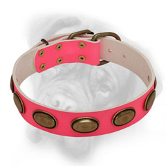 Leather pink Bullmastiff collar with brass ovals