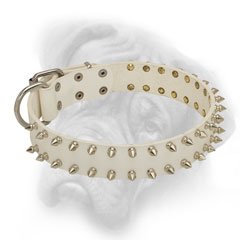 Spiked white leather Bullmastiff collar for walks