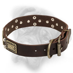 Super durable leather Bullmastiff collar