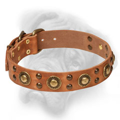 Fabulous collar with brass conchos and studs for  Bullmastiff