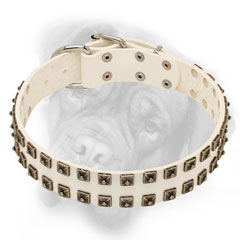 Royal genuine leather collar for Bullmastiff breed