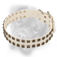 White Bullmastiff collar with brass studs