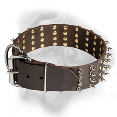 Leather Bullmastiff collar with nickel hardware