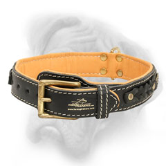 Bullmastiff collar with brass buckle