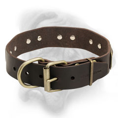 Quality Bullmastiff collar with strong fittings