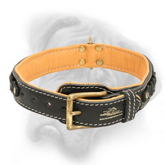 Bullmastiff collar with fur protection plate