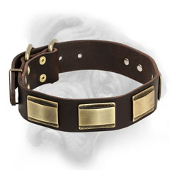 Decorated Bullmastiff collar with brass hammered  plates