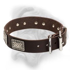 Practical Bullmastiff collar with nickel hardware
