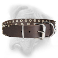 Strong collar for Bullmastiff with nickel fittings