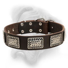 Bullmastiff collar with vintage nickel plates