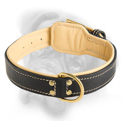 Adjustable Bullmastiff collar with riveted D-ring