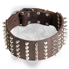 Leather Bullmastiff collar with spikes and studs