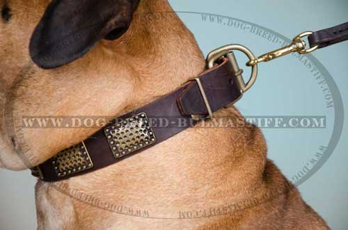 Great Dog Collar for Bullmastiff Breed