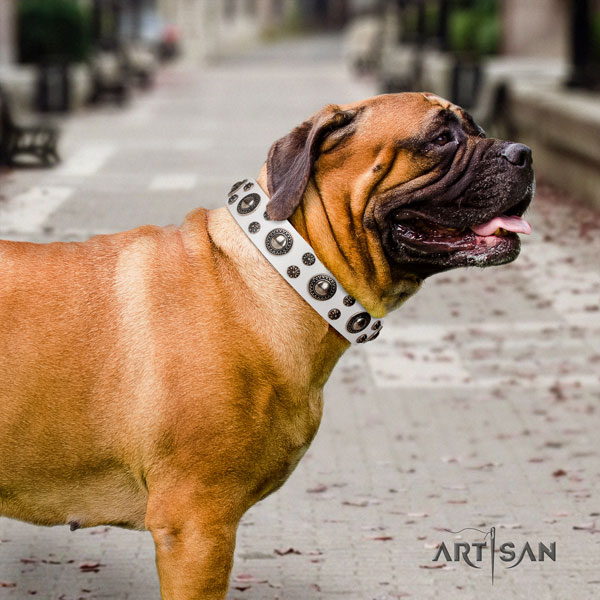 Bullmastiff embellished full grain genuine leather dog collar for your stylish canine