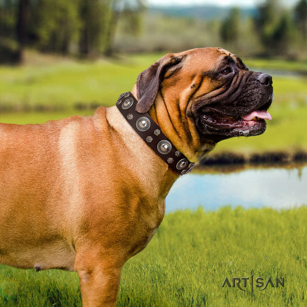 Bullmastiff studded natural genuine leather dog collar for your handsome doggie