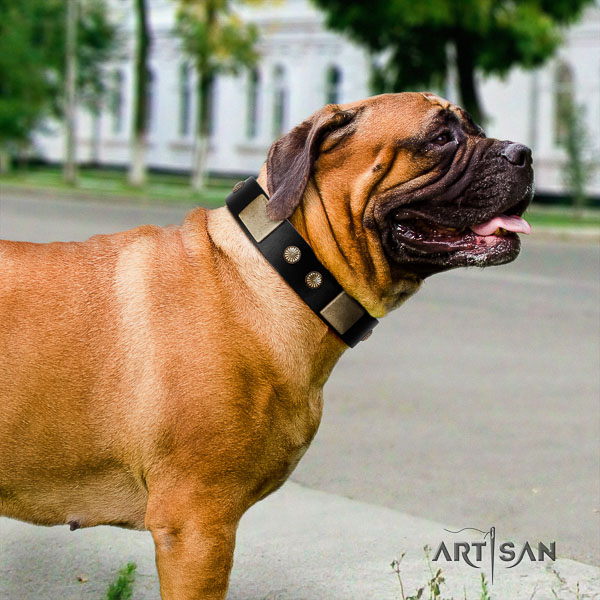 Bullmastiff comfortable wearing genuine leather collar with adornments for your pet