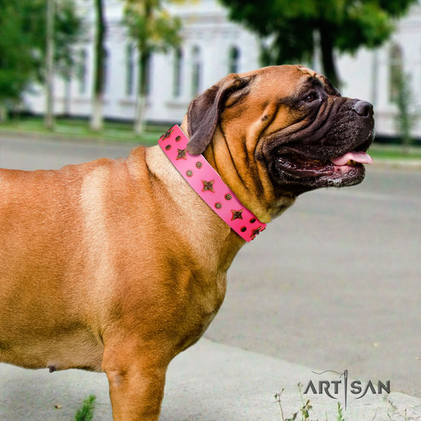 Bullmastiff adorned natural genuine leather dog collar for your stylish doggie