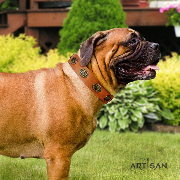 Bullmastiff adorned full grain genuine leather dog collar for your impressive canine