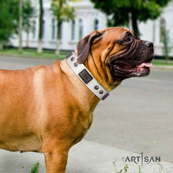 Bullmastiff studded full grain genuine leather dog collar for your handsome four-legged friend