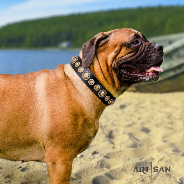 Bullmastiff adorned full grain genuine leather dog collar for your handsome canine