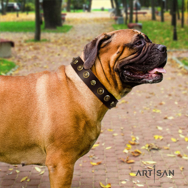 Bullmastiff comfortable wearing natural leather collar with decorations for your four-legged friend