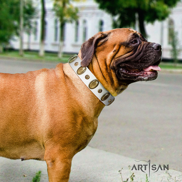 Bullmastiff stylish walking genuine leather collar with embellishments for your canine