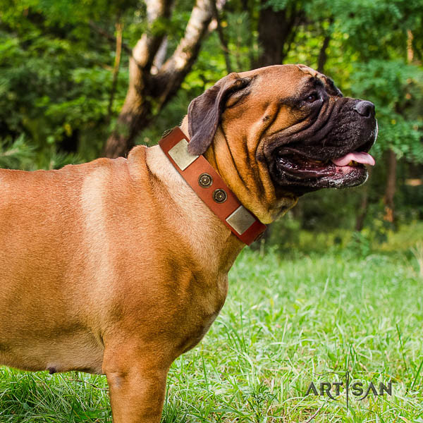Bullmastiff handy use full grain leather collar with embellishments for your canine