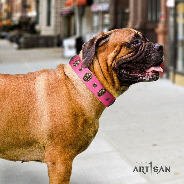 Bullmastiff comfy wearing full grain leather collar with adornments for your dog