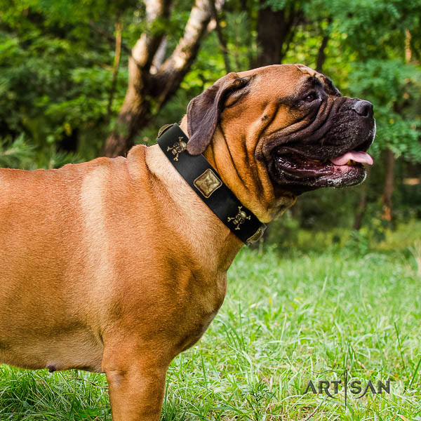 Bullmastiff everyday use genuine leather collar with embellishments for your four-legged friend
