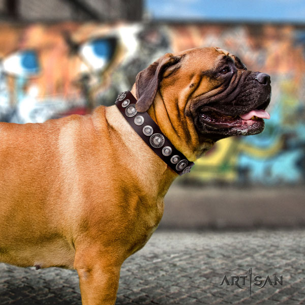 Bullmastiff adorned natural genuine leather dog collar for your impressive canine