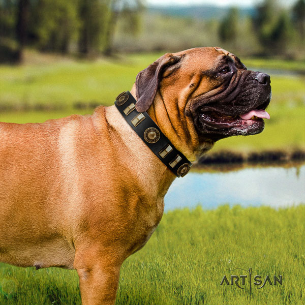 Bullmastiff basic training genuine leather collar with studs for your four-legged friend