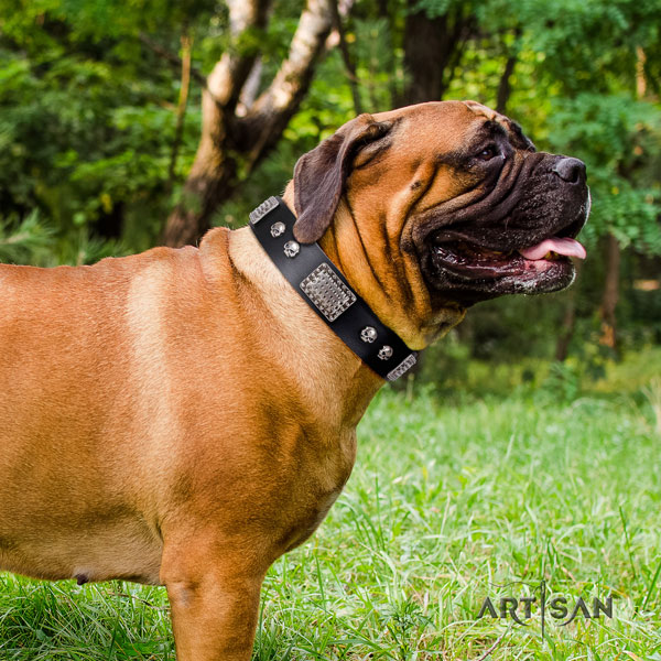 Bullmastiff studded full grain natural leather dog collar for your handsome dog
