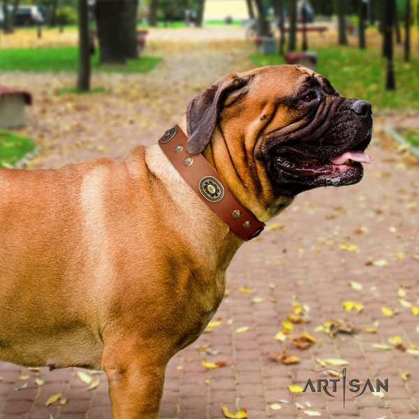 Bullmastiff embellished natural genuine leather dog collar for your lovely four-legged friend