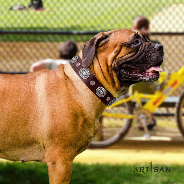 Bullmastiff decorated full grain natural leather dog collar for your stylish four-legged friend