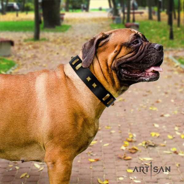 Bullmastiff daily walking full grain genuine leather collar with studs for your four-legged friend