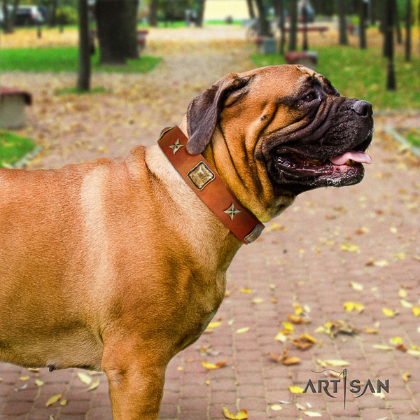 Bullmastiff basic training full grain genuine leather collar with decorations for your doggie